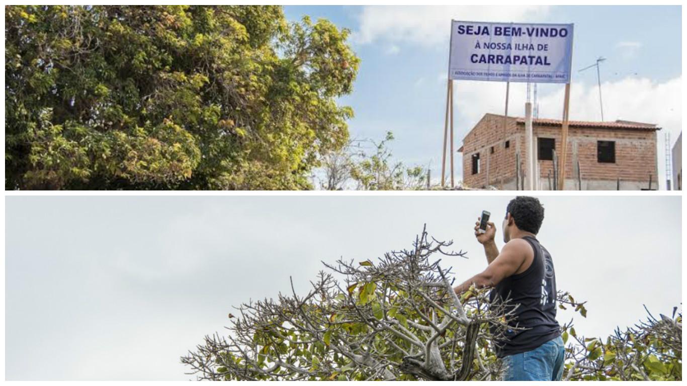 Moradores precisam subir em árvores para tentar capturar o sinal de telefonia dos municípios mais próximos